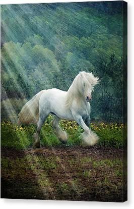 Horse Artwork Canvas Print - Billy Rays by Fran J Scott