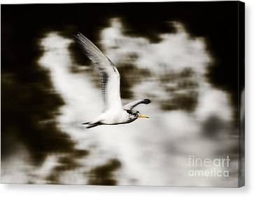 Bird Flying In The Clouds Canvas Print