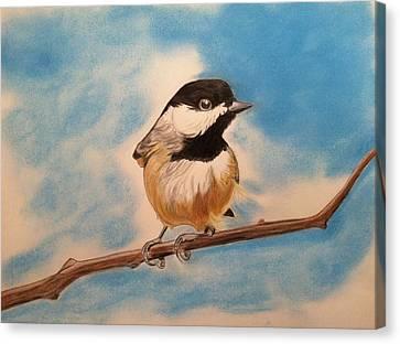 Black Capped Chickadee Canvas Print by Tony Clark