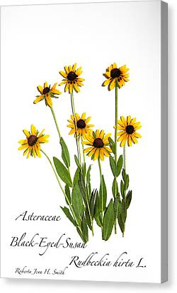 Black-eyed-susan Canvas Print