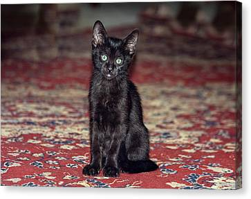 Courage Canvas Print - Black Kitten by Zandria Muench Beraldo