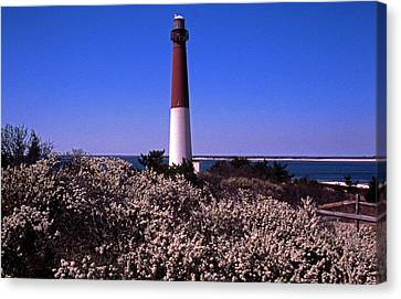 Blooming Barnegat Canvas Print by Skip Willits