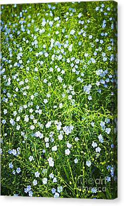 Blooming Flax  Canvas Print by Elena Elisseeva