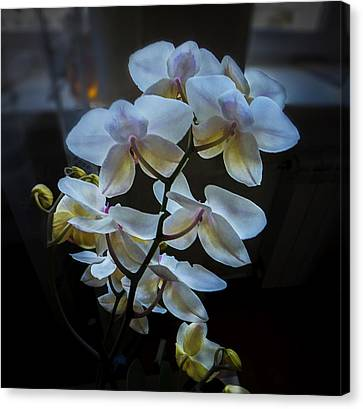 Blooming Orchid Canvas Print