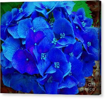 Blue Beauty Canvas Print by Annette Allman