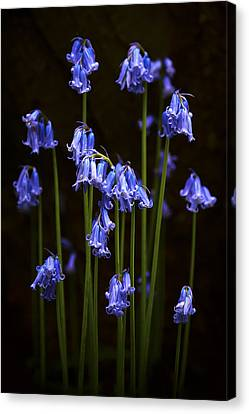 Blue Bells Canvas Print by Svetlana Sewell