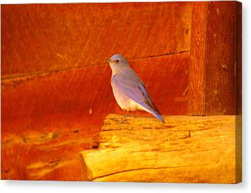 Blue Bird Canvas Print by Jeff Swan