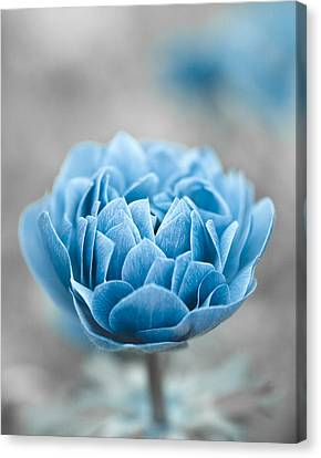 Silver Turquoise Canvas Print - Blue Flower by Frank Tschakert