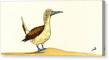 Blue Footed Booby Canvas Print by Juan  Bosco