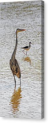 Blue Heron And Stilt Canvas Print by Tom Janca