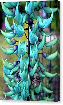 Blue Jade Plant  Hawaii, United States Canvas Print by Scott Mead