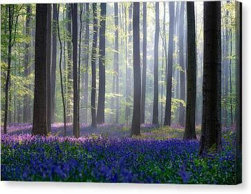 Bluebells Canvas Print by Adrian Popan