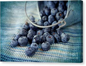 Blueberries Canvas Print by Darren Fisher
