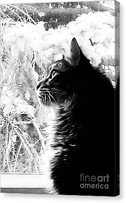 Canvas Print featuring the photograph Bo by Jacqueline McReynolds
