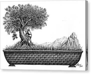 Bonsai Canvas Print by Boyan Donev