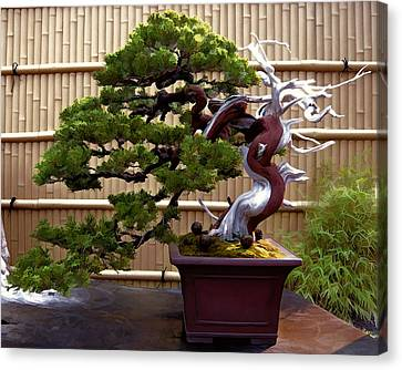 Bamboo Fence Canvas Print - Bonsai Tree And Bamboo Fence by Elaine Plesser