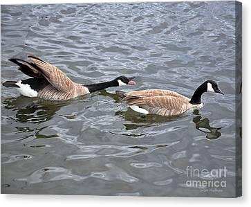Bossy Canada Goose Canvas Print by Susan Wiedmann