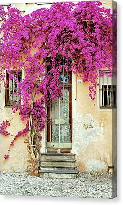 Bougainvillea Doorway Canvas Print by Allen Beatty