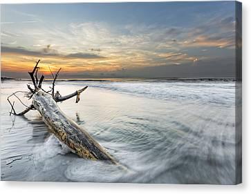 Bough In Ocean Canvas Print