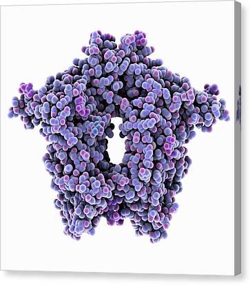 Bovine Coronavirus Enzyme Canvas Print by Laguna Design