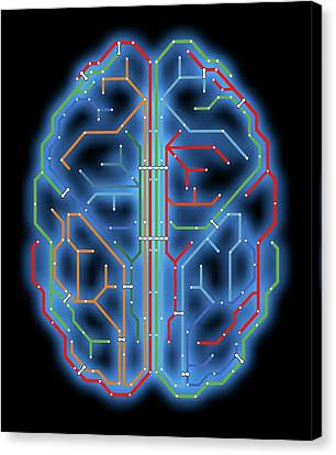 Brain Canvas Print by Alfred Pasieka