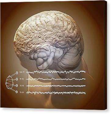 Left Hemisphere Canvas Print - Brain And Hippocampus by Zephyr