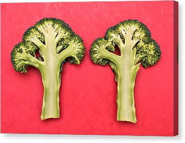 Broccoli Canvas Print by Tom Gowanlock