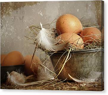 Brown Speckled Eggs  In Old Tin Bowl Canvas Print by Sandra Cunningham