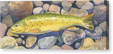 Brown Trout Rush Creek Canvas Print by Mark Jennings