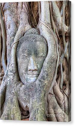 Buddha Head In Tree Canvas Print by Fototrav Print