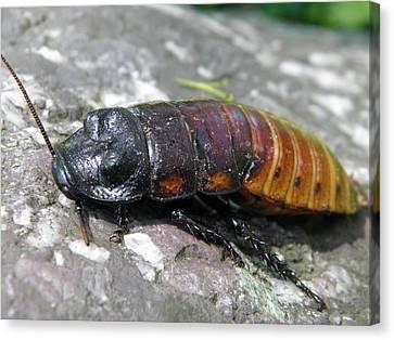 Bug Canvas Print