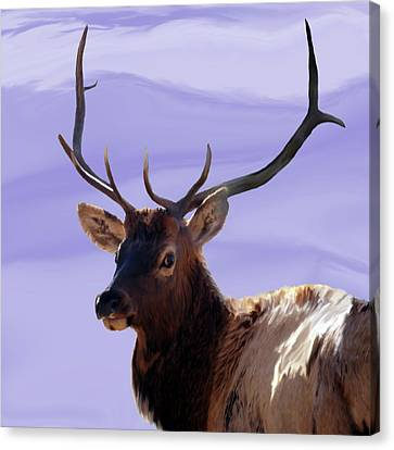 Bull Elk Freehand Canvas Print by Ernie Echols