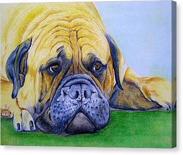 Bulldog Canvas Print by Prashant Shah