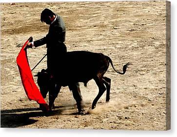 Bullfighter In Training Canvas Print by Carlee Ojeda