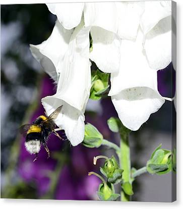 Workings Canvas Print - Bumblebee Macro by Tommytechno Sweden