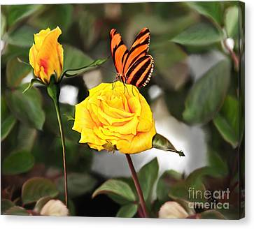 Busy Butterfly Canvas Print
