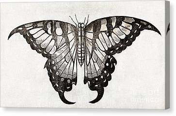 Butterfly, 17th Century Artwork Canvas Print by Middle Temple Library