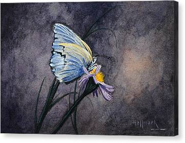 Butterfly Canvas Print by Bob Hallmark