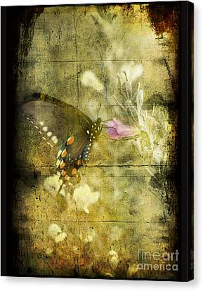 Butterfly Canvas Print by Jim Wright