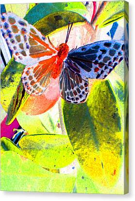 Butterfly  Canvas Print by Nico Bielow