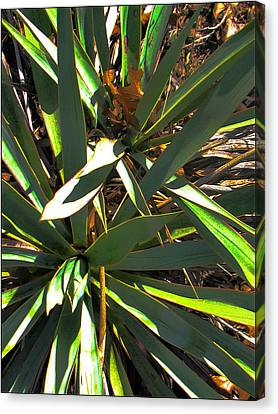 Cactuscomp3 2009 Canvas Print