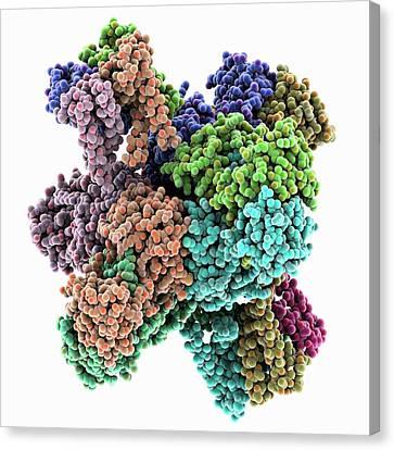 Calcium-activate Potassium Channel Canvas Print by Laguna Design