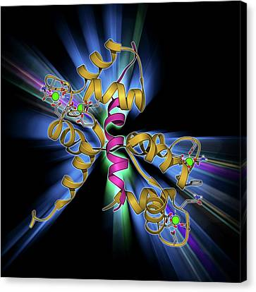 Calcium-binding Protein Molecule Canvas Print by Laguna Design