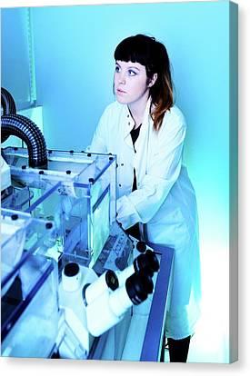 Calcium-imaging Neuron Microscopy Canvas Print by Mcs