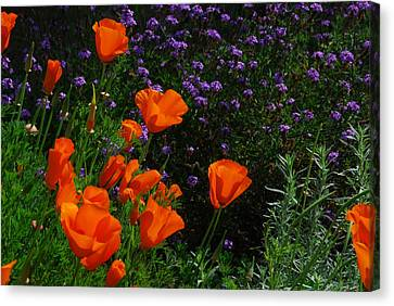 Canvas Print featuring the photograph California Poppies by Lynn Bauer