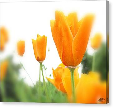 California Poppies Canvas Print by Steve Huang