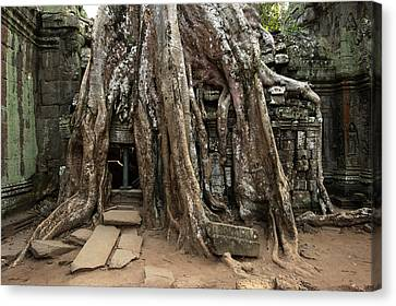Openair Canvas Print - Cambodia, Siem Reap, Angkor, Ta Prohm by Tips Images