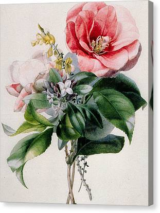 Camellia And Broom Canvas Print by Marie-Anne