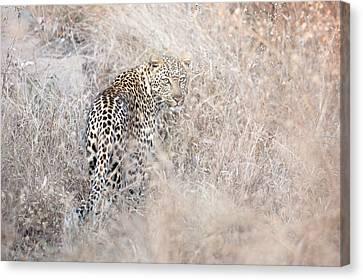 Camouflaged Leopard Canvas Print by Christa Niederer