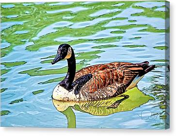 Canvas Print featuring the photograph Canada Goose by Ludwig Keck